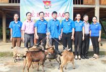 Trung tâm Thanh thiếu niên Trung ương bàn giao mô hình hỗ trợ thanh niên yếu thế, sau cai nghiện tại Bắc Quang và Vị Xuyên