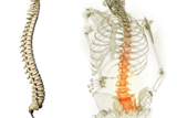 Dành 10 phút tập Yoga chữa đau cột sống thắt lưng hiệu quả