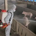 Vì sao chúng ta nên khử trùng xung quanh môi trường sống?